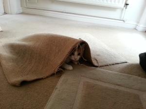 Unravelling my doormat!