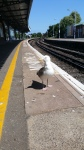 Mr Seagull, who was desperately looking for food as we waited for our carriage back home!