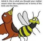 birds n bees