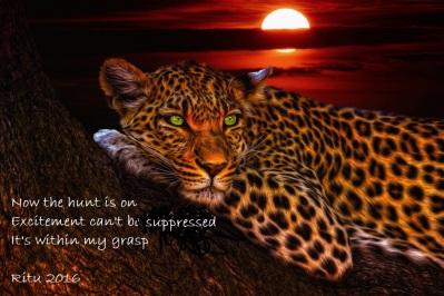 leopard-1230855_1920