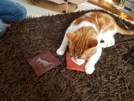 Catnip Cat Gets Skittish